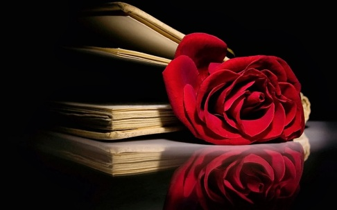 red-roses-1